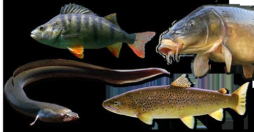 Zielfische & Themen